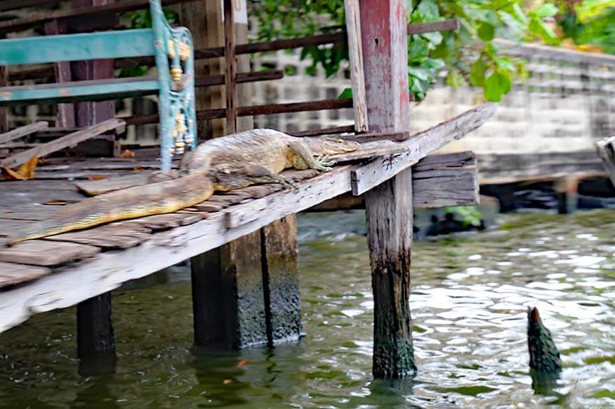 Water lizard as seen from canal tour in Bangkok
