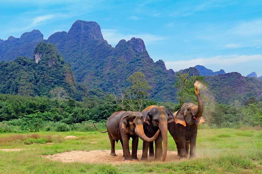 All you may want to know about visiting the Elephant Hills resort in Khao Sok National Park in Thailand