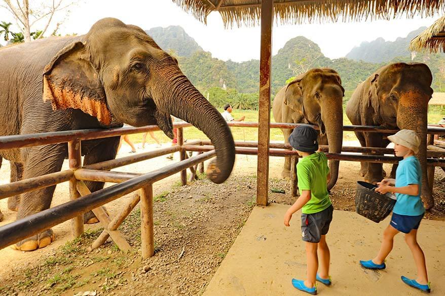 Kids feeding elephants at the Elephant Hills in Khao Sok NP Thaiand