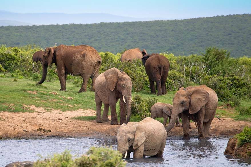 Addo Elephant National Park offers one of the best safari experiences in South Africa