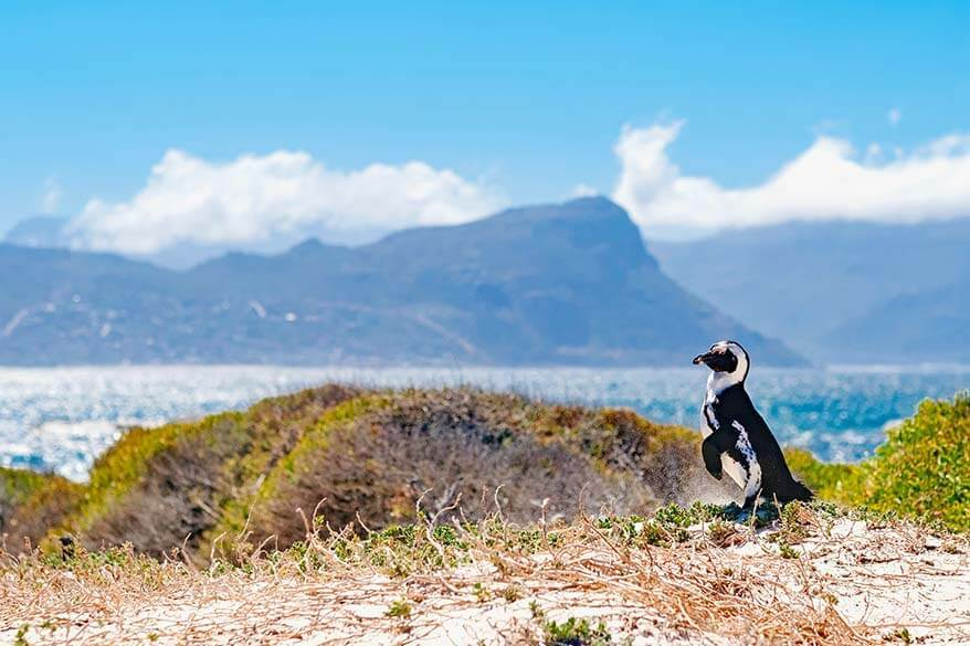 Cape Peninsula is a wonderful place that you really have to visit in South Africa