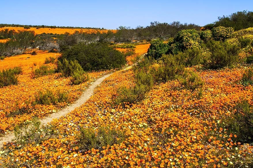 Namaqua National Park and Namaqualand - one of the best places to visit in South Africa in spring