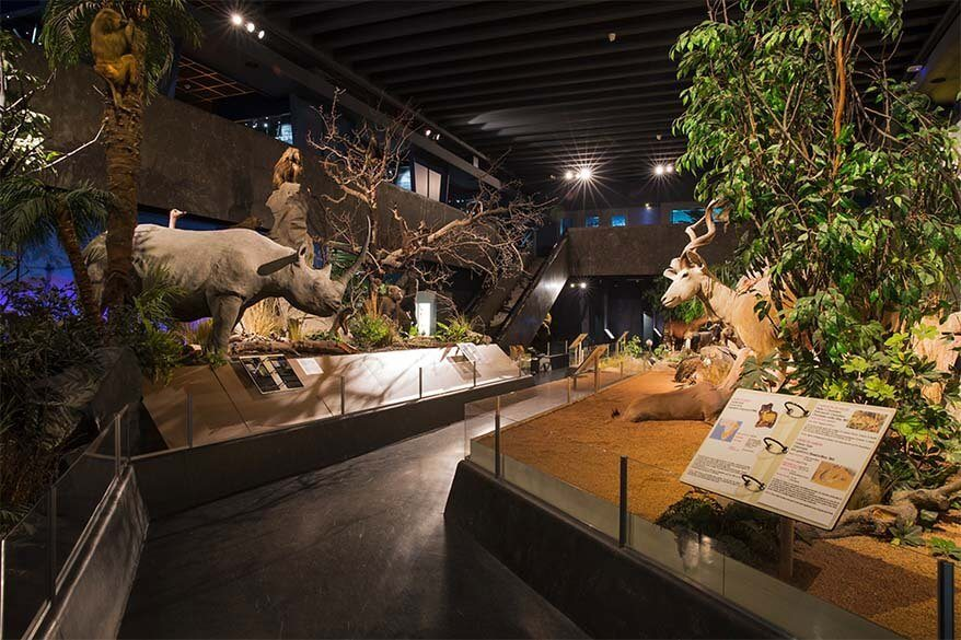 Natural History Museum is one of the best museums to visit in Geneva, Switzerland