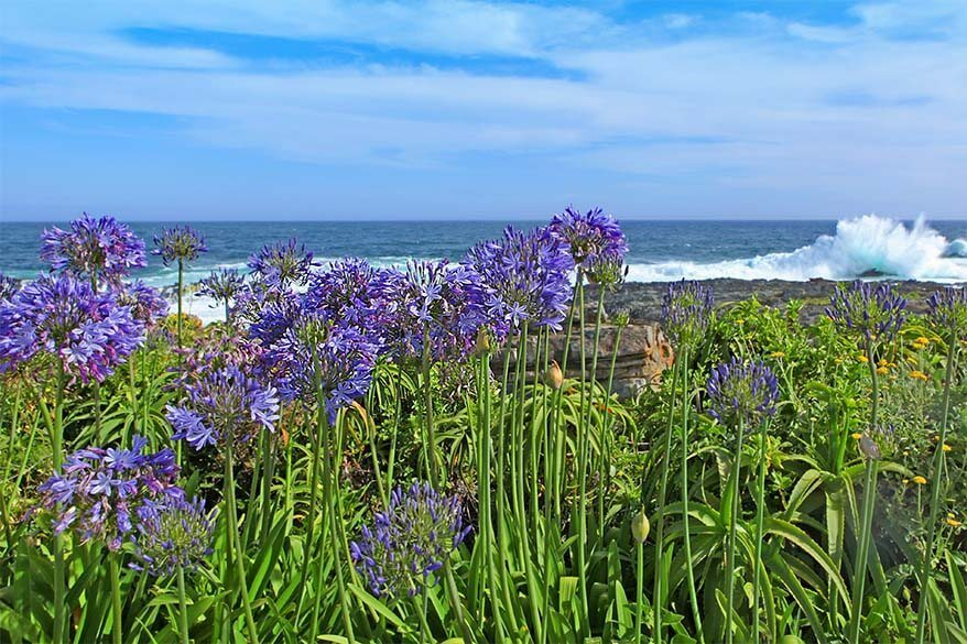 Tsitsikamma National Park along the Garden Route - beautiful region to visit in South Africa
