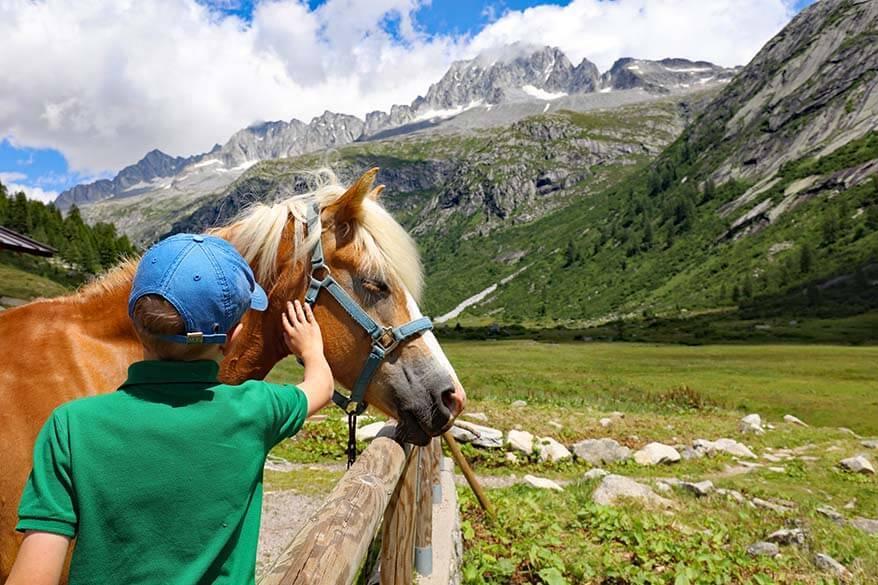 Horses at a stable of Malga Val di Fumo, Trentino Italy