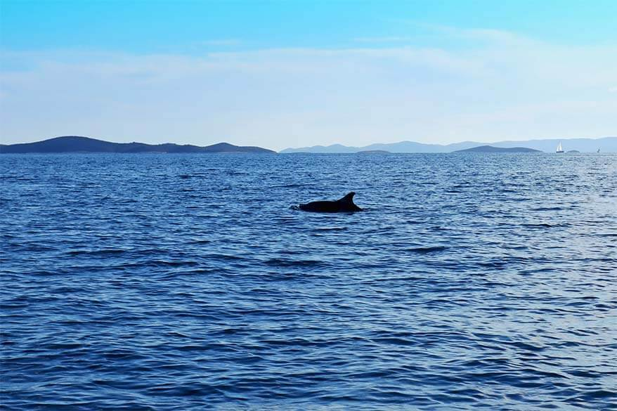 Dolphins on Blue Cave tour from Split in Croatia
