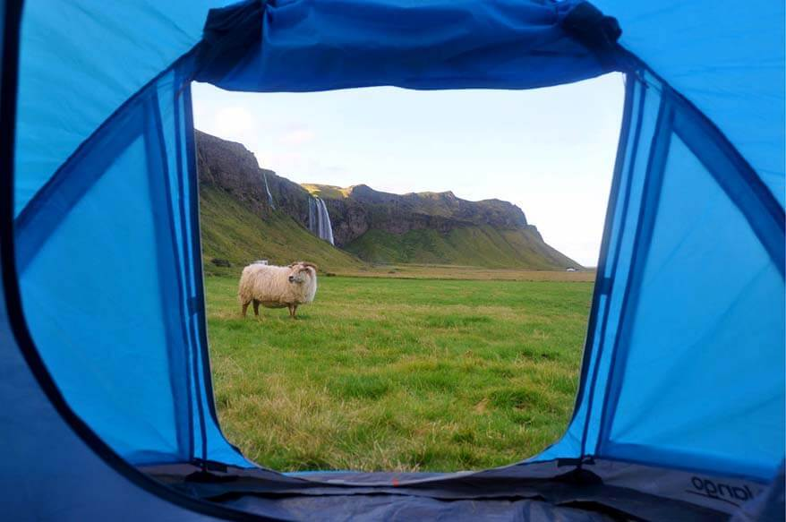 Tent camping in Iceland - experience and tips