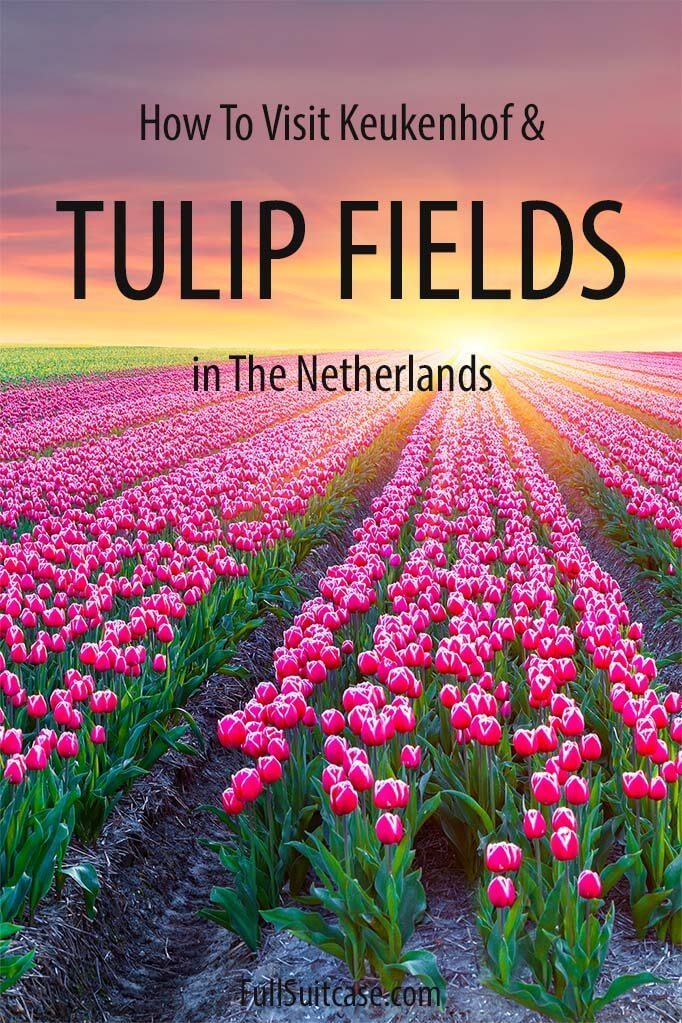 How to visit Keukenhof and Lisse tulip fields