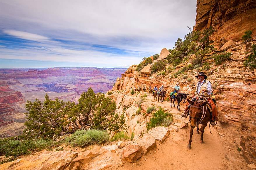 Mule ride in the Grand Canyon