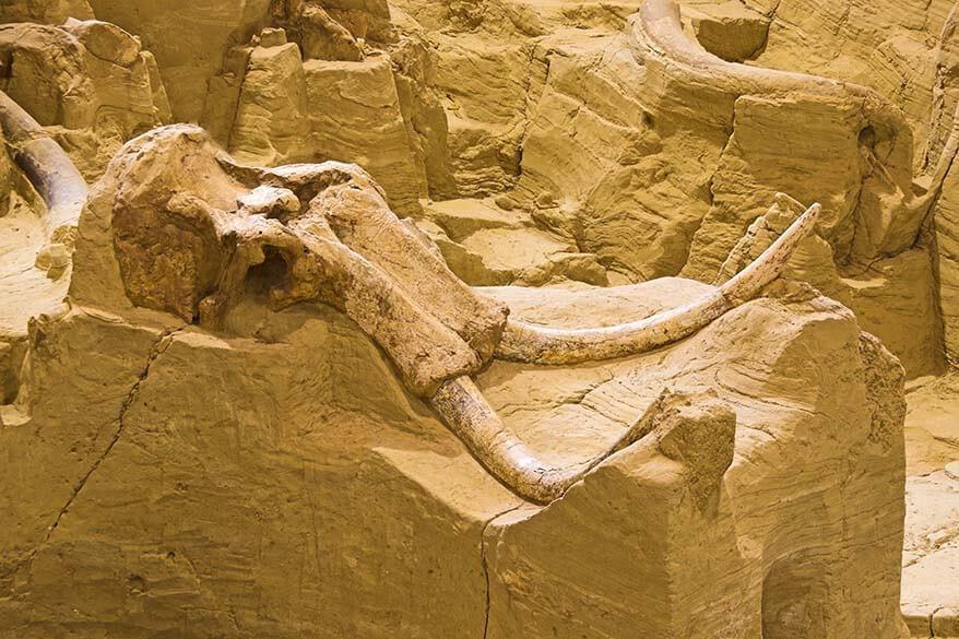 The Mammoth Site in South Dakota, USA