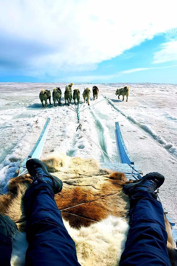 Dog sledding in Greenland in summer