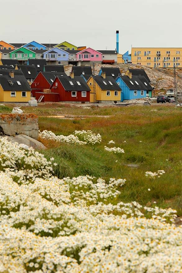 Flowers and colorful houses in Ilulissat Greenland