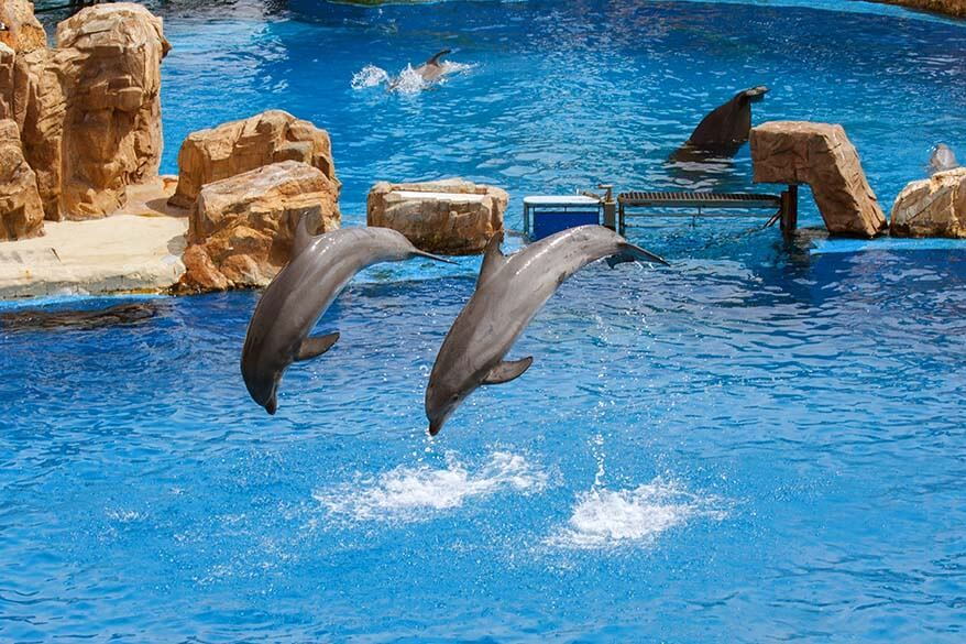 Dolphins at SeaWorld San Diego in California