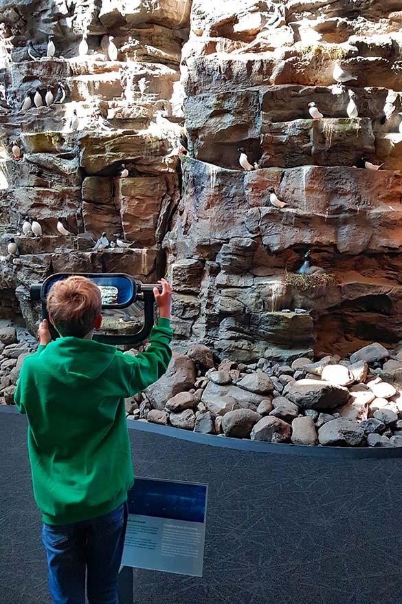 Latrabjarg bird cliffs at Perlan Museum in Reykjavik