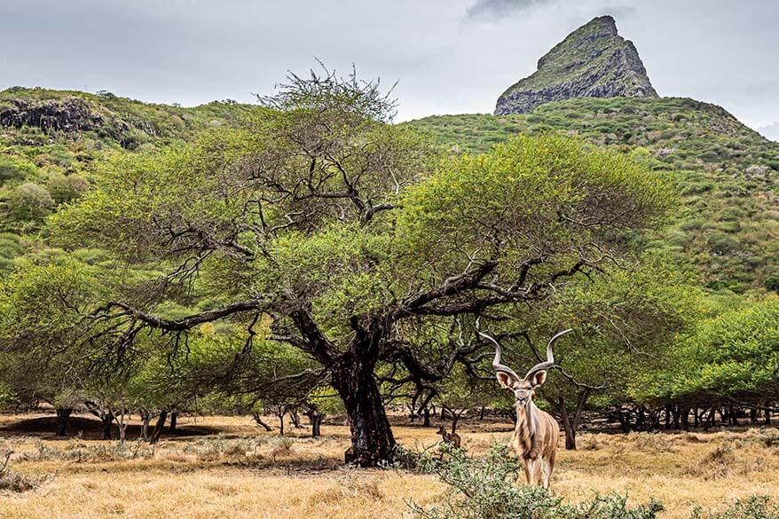 Safari in Casela Nature Park in Mauritius