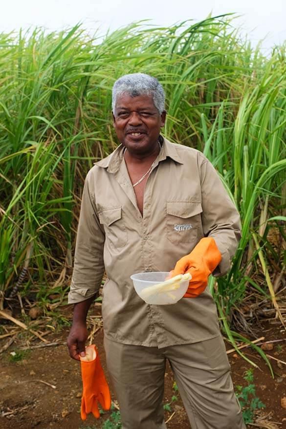 Tasting sugarcane at L'Aventure du Sucre in Mauritius