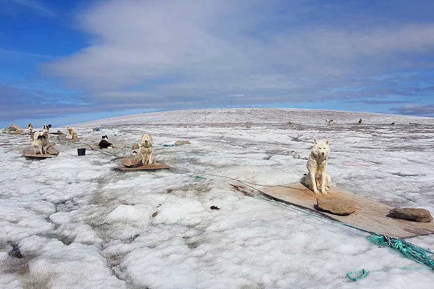 Huskies on Lyngmark Glacier in Greenland