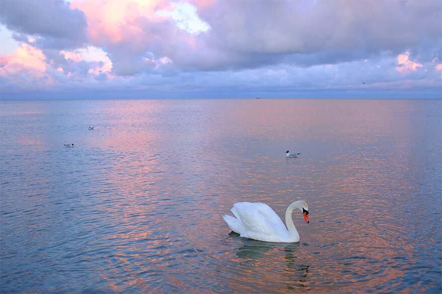 Curonian Lagoon at sunset - Nida Lithuania