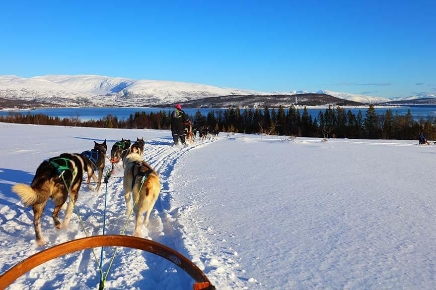 Dog sledding is a must when visiting Tromso in winter