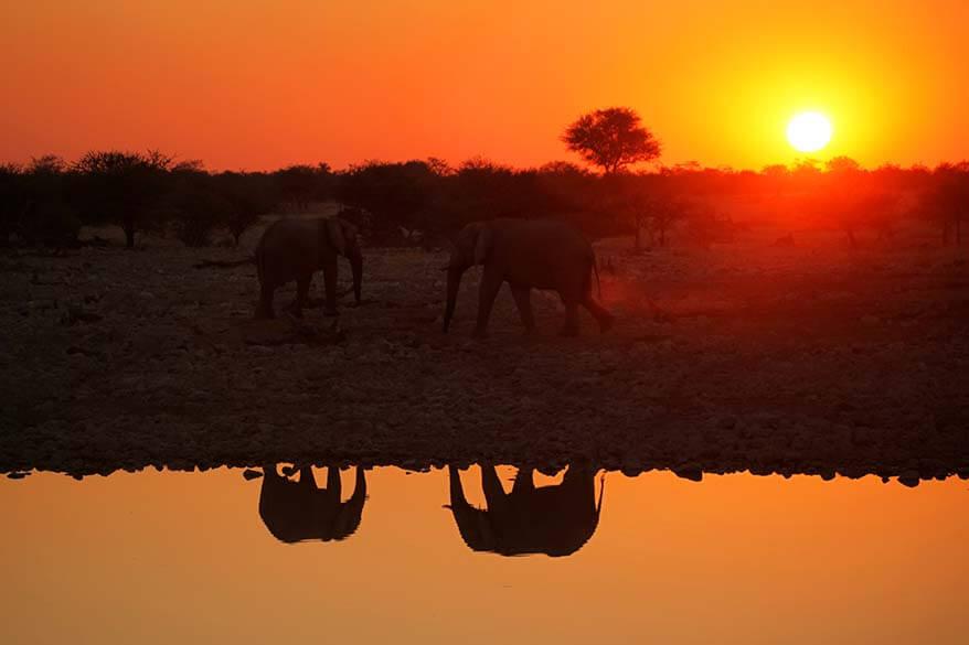 Elephants at Okaukejo waterhole in Etosha at sunset