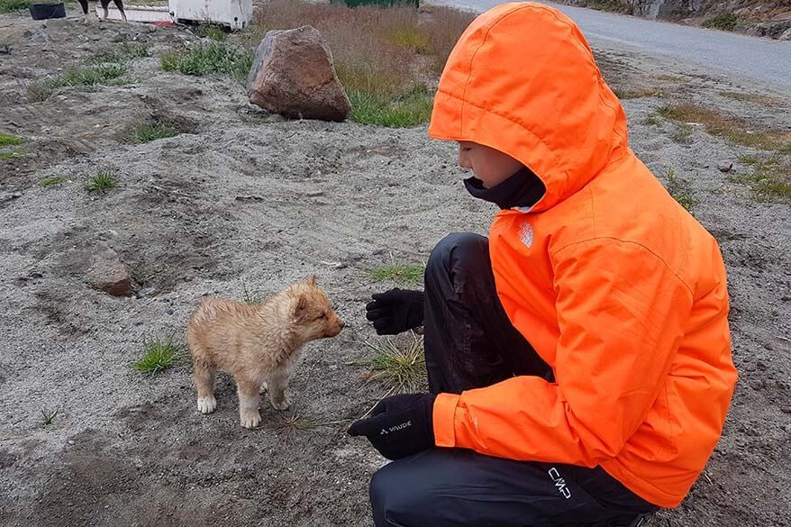 Greenland with kids - playing with husky puppy in Ilulissat