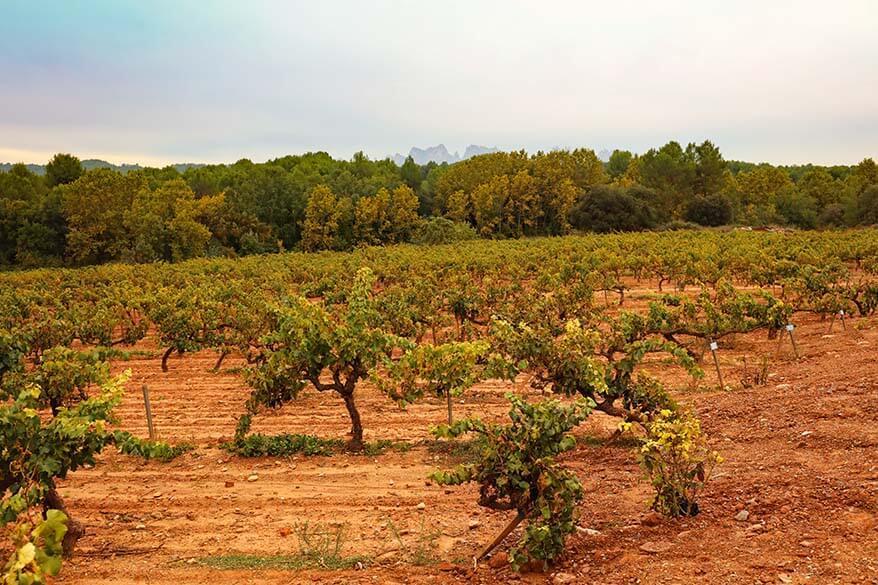 Oller del Mas vineyards near Montserrat