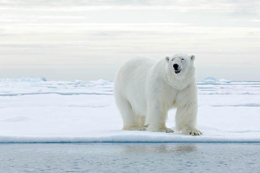 Visiting Svalbard: Travel Guide, Fun Facts & Top Tips for Your First Trip