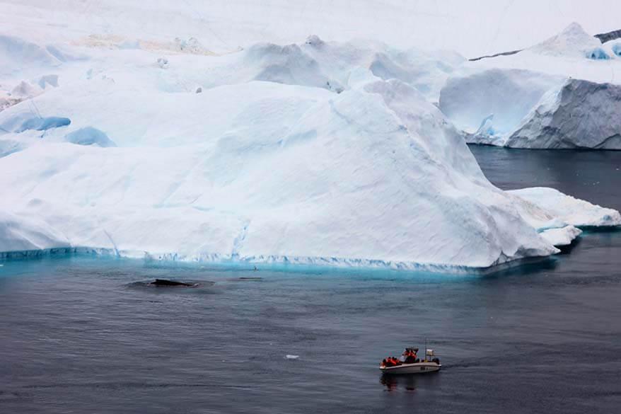 Whale watching in Ilulissat Greenland