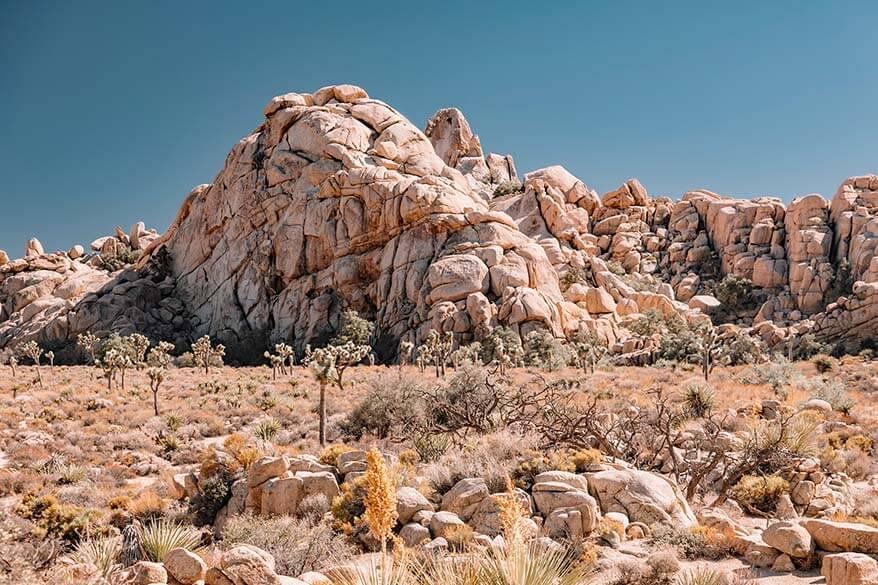 Joshua Tree National Park in September