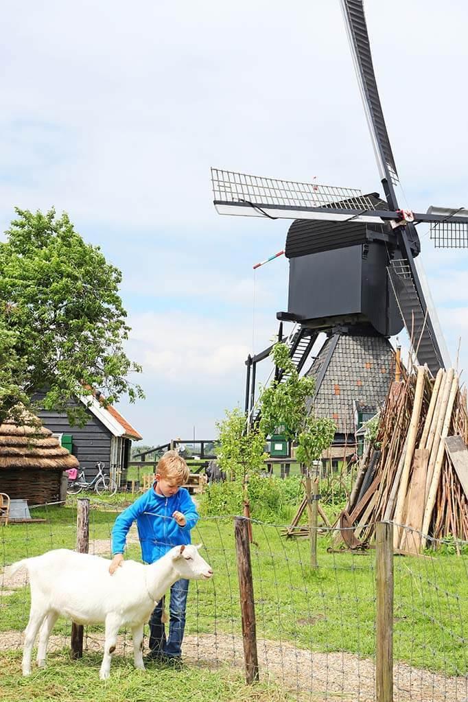 Kids petting a goat at the windmills of Kinderdijk