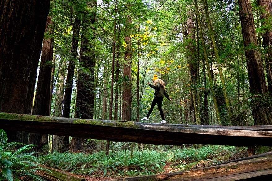 Redwood National Park in September