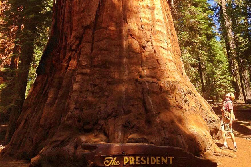 Sequoia National Park in September