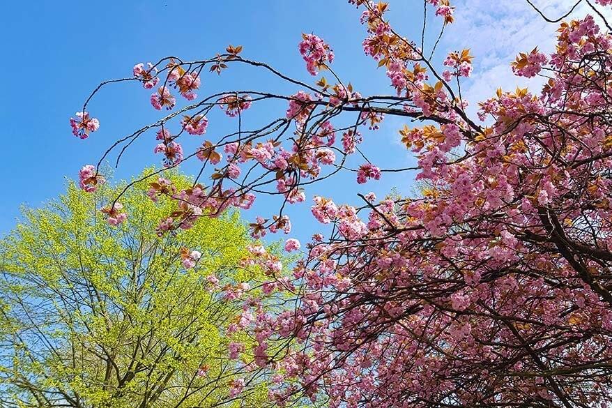Spring blossoms in Belgium