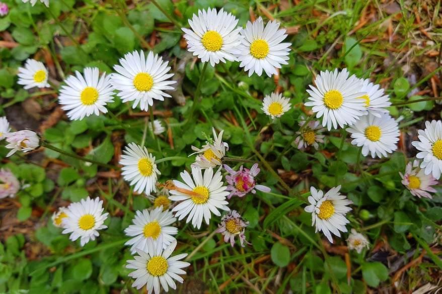 Spring flowers - quarantine day 47