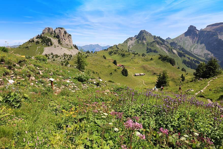 Swiss Flower Trail - Botanical Alpine Garden at Schynige Platte