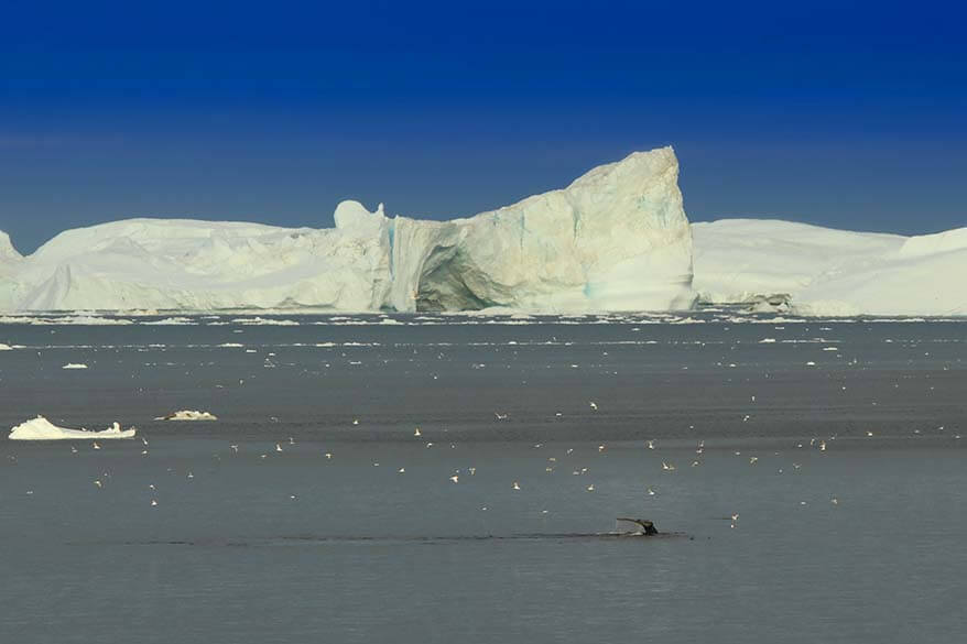 Watching whales and icebergs from our hotel room at Hotel Icefiord in Ilulissat
