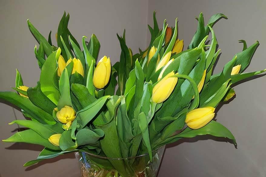 Yellow tulips - corona blog day 41