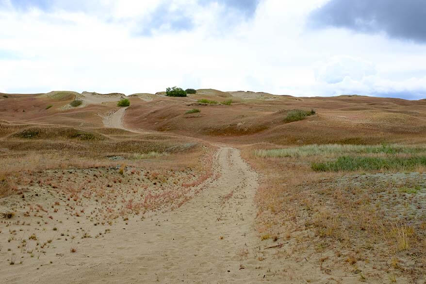 Dead Dunes at Nagliai Nature Reserve on the Curonian Spit