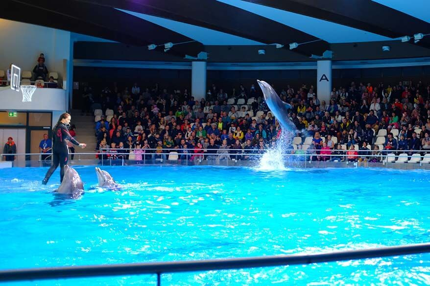 Dolphin show at the Lithuanian Sea Museum