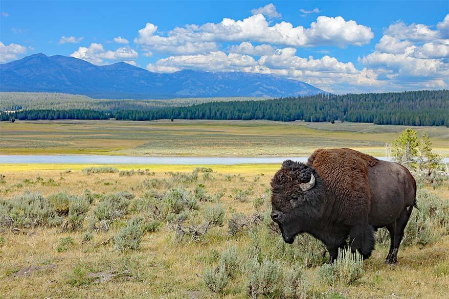 Two Days in Yellowstone: What to See, Map & Itinerary
