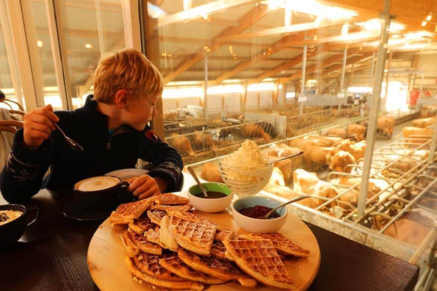 Icelandic waffles at Kaffi Ku