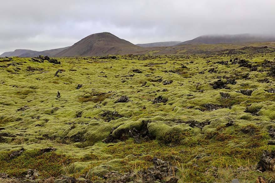 Lava field in Reykjanes Peninsula
