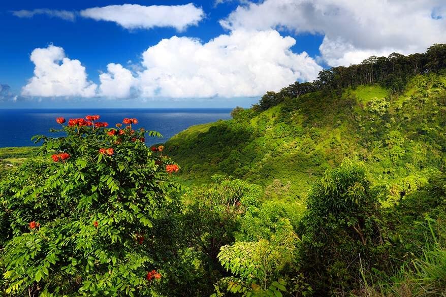 Maui coastline and flowers
