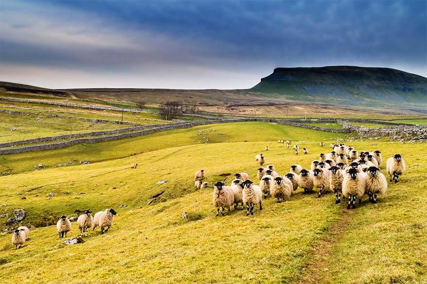 Yorkshire things to do and best day trips