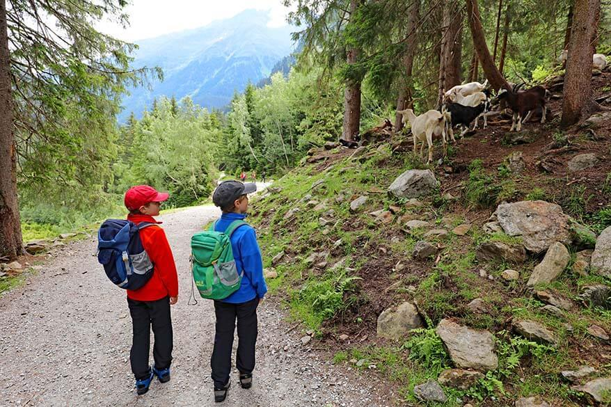 Hiking the Wild Water Trail in Stubai Valley with kids