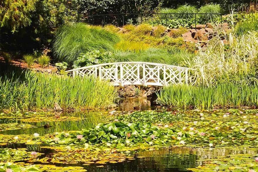 Lily Pond Exhibit Royal Tasmanian Botanical Gardens in Hobart