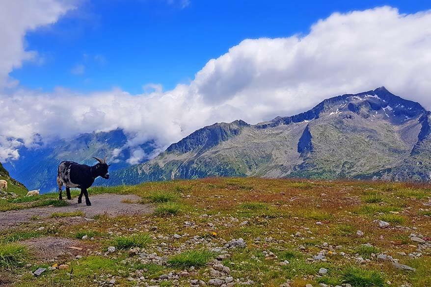 Zillertal mountains in summer