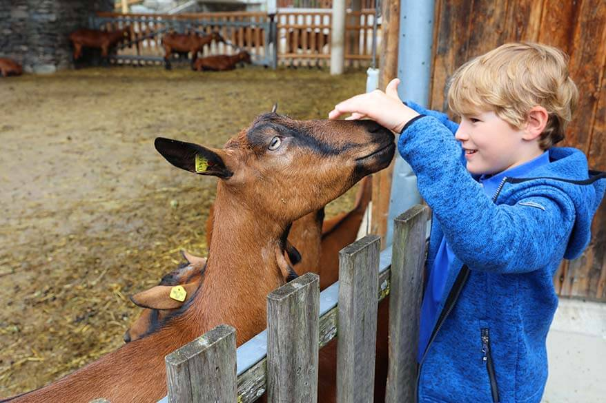 Zillertal with kids - visiting a show farm at ErlebnisSennerei Zillertal