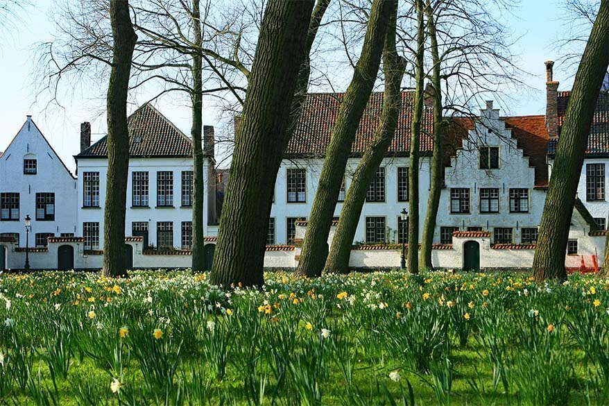 Bruges Beguinage with blooming daffodils in spring