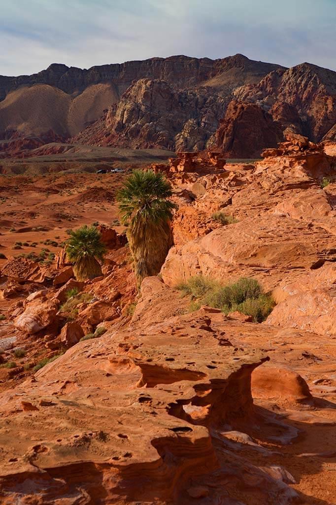 Desert landscape of Gold Butte National Monument